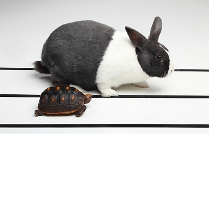 hare and tortoise front page