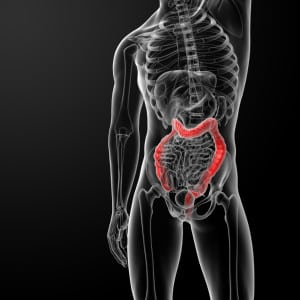 3d rendered illustration of male larg intestine - side view