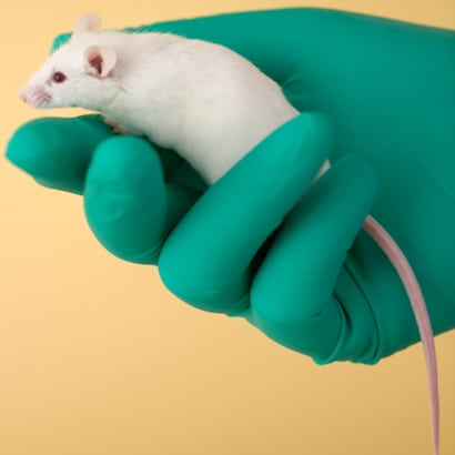White mouse held in a green gloved hand
