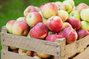Box filled with harvested autumn apples