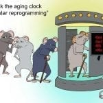 mouse-antiaging-graphic